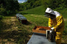 DISCOVERING BEES and HONEY