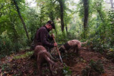 DISCOVERING TRUFFLES